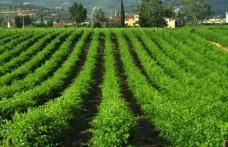 Amarone: il Consorzio legittima quello di pianura