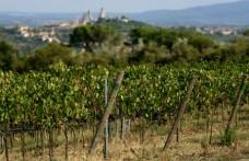 Vernaccia di San Gimignano: 10 milioni di euro da Banca Mps