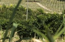 """Santa Margherita acquista 4 ettari (3 a Glera) sulle """"Rive"""""""