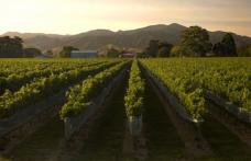 Nuova Zelanda: pronti a spingere l'export