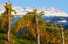 Domani a Bolzano la XIV Vinea Tirolensis
