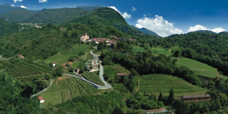 Nel Canton Ticino l'audacia del Merlot