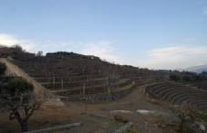 La Gelsomina Brut Rosé: il primo spumante Etna Doc