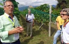 Spazio al Pinot bianco in Alto Adige!