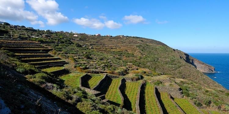La vite ad alberello di Pantelleria diventa Patrimonio Unesco
