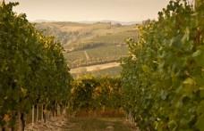 Pio Cesare acquista 8 ettari a Monforte d'Alba
