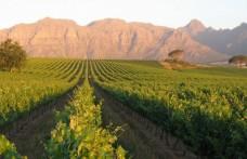 Jackson Family Wines: gli ultimi acquisti a Stellenbosch