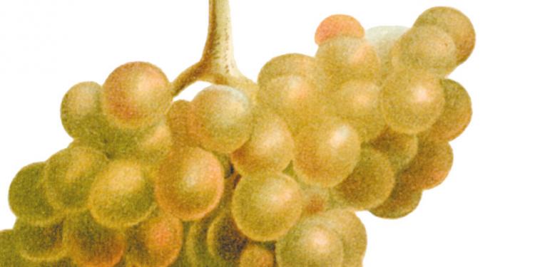 Italian Wine Chronicle #2 / L'Italia che cambia
