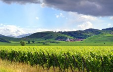 A settembre i vini d'Alsazia a Drink Alsace Milano