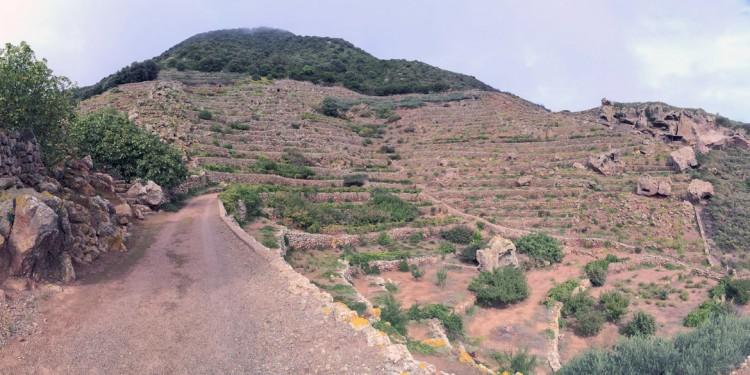 Viaggio a Pantelleria tra i tesori dell'isola: capperi e vini passiti