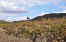 Il nostro Dizionario del Vino Spagnolo