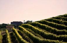 Weekend in Monferrato. Un fine settimana cullati dalle colline