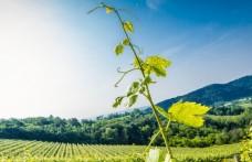 Weekend nel Collio, ai confini della viticoltura italiana