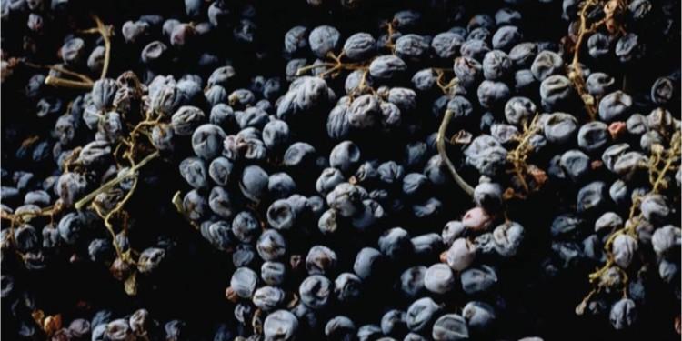 Nel nuovo fruttaio di Cantina Valpantena