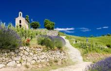 Viaggio nel Rodano tra Syrah, Grenache e Viognier