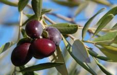A Meditaggiasca le olive dall'antipasto al dolce