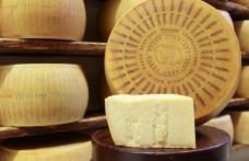 La riscoperta del Parmigiano Reggiano Vacche Rosse