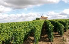Il mercato dello Champagne tra Maison e vignérons
