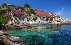 I vini dell'Isola d'Elba: dai fasti di Napoleone rinascono gli eroi