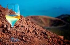 Mineralità del vino: i suoli più adatti