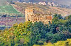 Sabotaggio da Conte Vistarino: persi 5.300 ettolitri di vino