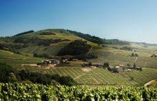 Vola il Crémant de Bourgogne, cala Bordeaux e vino sfuso