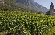 Pinot nero in Italia, un mondo da esplorare