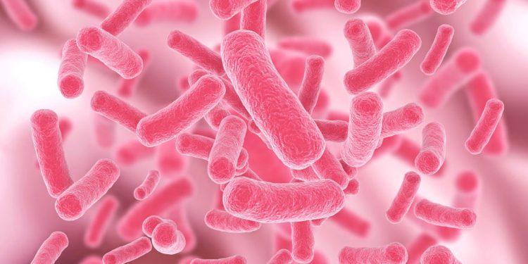 La tipicità del vino è nei microbioti: funghi, lieviti e batteri