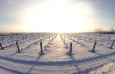 I vini del Québec chiedono la Igp