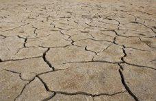 Cos'è la cisgenetica e perché può salvarci dal climate change