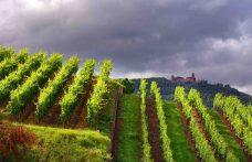 In Alsazia è il terroir che conta