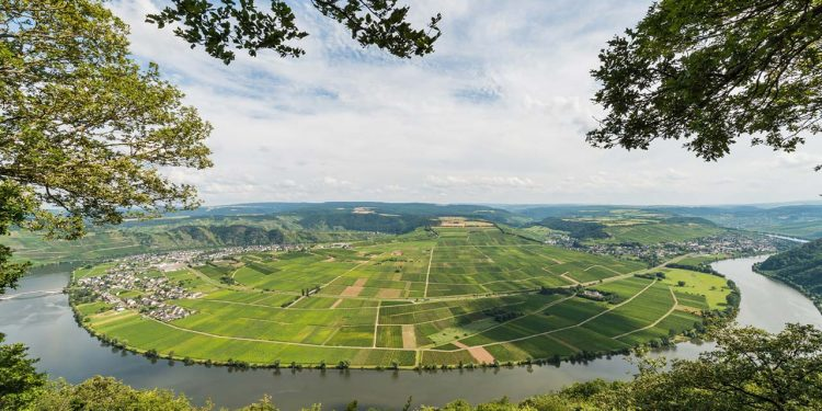 I Grosses Gewächs (GG), Grand Cru del vino tedesco
