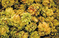 Birre delle Marche: il nostro itinerario