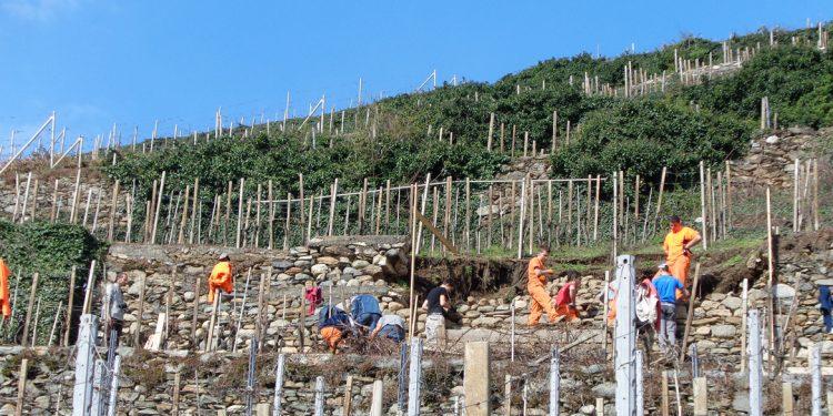 """Sciúr, un """"signor vino"""" tutela i muretti a secco della Valtellina"""