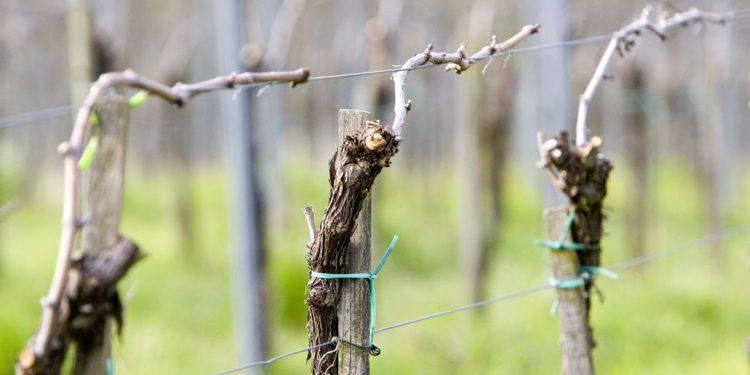 Vini Piwi: ora anche la Lombardia ha la sua associazione