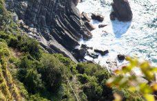 Bosco, la spina dorsale dei bianchi delle Cinque Terre