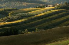 Cru del Chianti Classico: un percorso in salita?