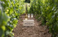Paillard si dimette per la tutela dello Champagne