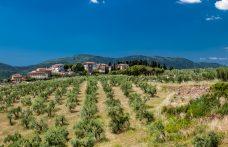 Carmignano Docg, il vino dei Medici alla Tenuta di Artimino