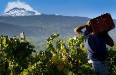 Oscar Farinetti investe sull'Etna con Borgogno