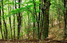 Genagricola in Romania si dà alla silvicoltura
