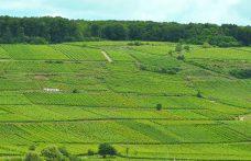L'Alsazia dei Riesling. E dei Pinot, dei Sylvaner…