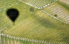 Il giro del mondo delle vigne in 200 giorni