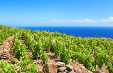 Maremma Toscana Doc verso 10 milioni di bottiglie