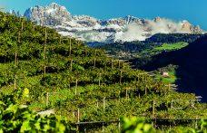 Vini Alto Adige Doc. Eccellenza  e sostenibilità a marchio europeo