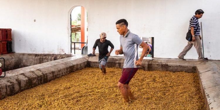 La patria del Pisco muove i primi passi nel mondo del vino