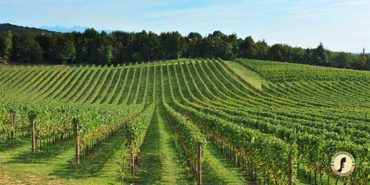 Stop impianti per il Pinot grigio delle Venezie