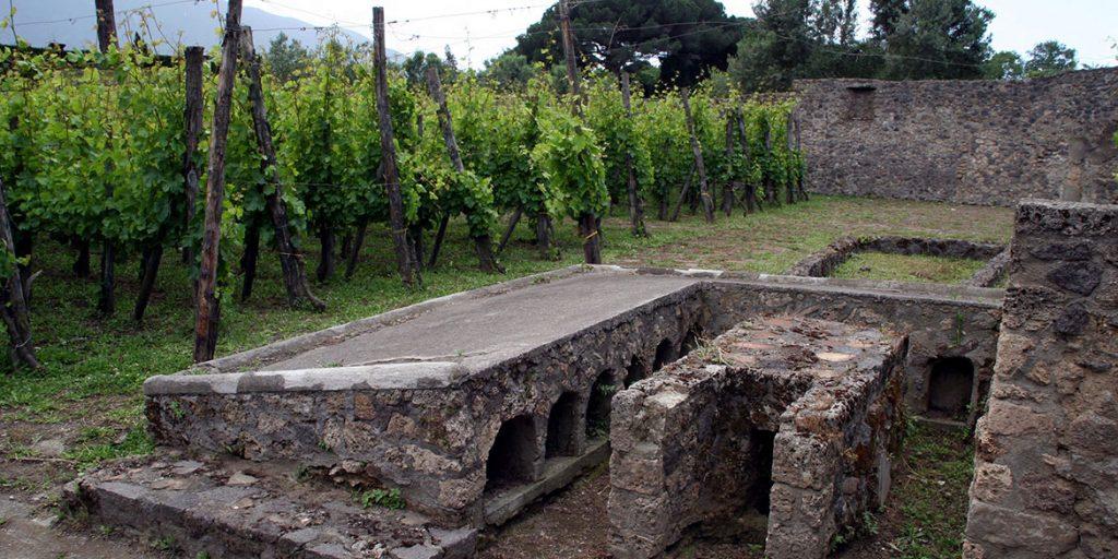 Progetto Pompei Mastroberardino