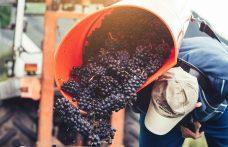 Pinot nero Castelfeder: presentati tre nuovi cru