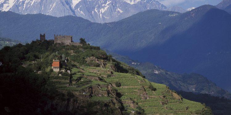 Chiavennasca, il Nebbiolo in Valtellina